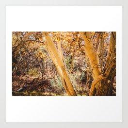 Trees in Arizona Art Print