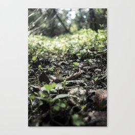 Circle of Life Canvas Print