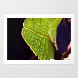 Macro // Leaf Art Print