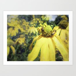 Bees on Yellow Flower Art Print
