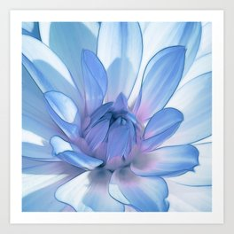 Dahlia blue 202 Art Print