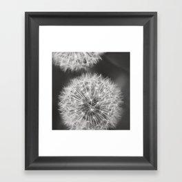Dandelion Wishes Framed Art Print