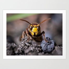 the hornet and you Art Print