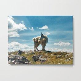 Goat on Buffalo Mountain, Colorado Metal Print