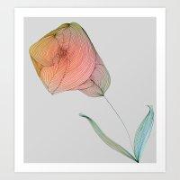 tulip Art Prints featuring Tulip by Brontosaurus