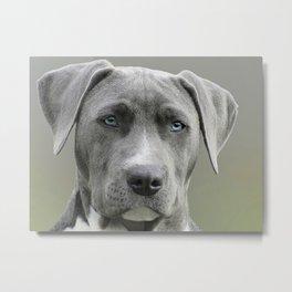 Canine 16 Metal Print