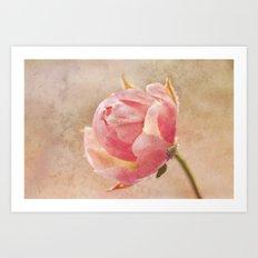 Pretty Little Rosebud. Art Print
