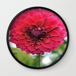 Flower of dahlia Wall Clock
