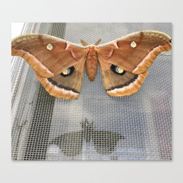 A Moth and Shadow on my Window Screen Canvas Print