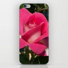 Bon-Bon Rose iPhone Skin