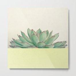 Succulent Dip II Metal Print
