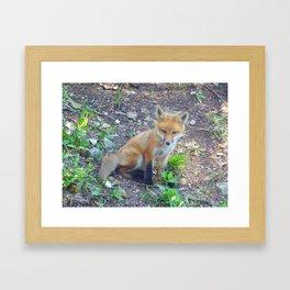 fox 2018-3 Framed Art Print