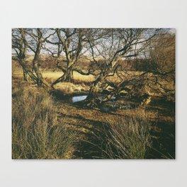 swamped trees. ullswater, lake district, uk Canvas Print