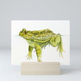 Helmeted Water Toad (Calyptocephallela gayi) Mini Art Print