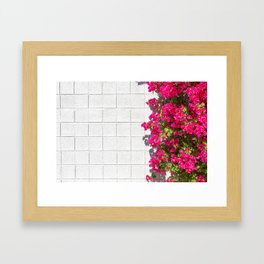Bougainvilleas and White Brick Wall in Palm Springs, California Framed Art Print