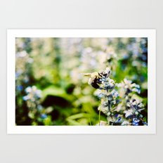 SWEET BEE Art Print