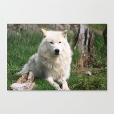 Watching the Pack Canvas Print