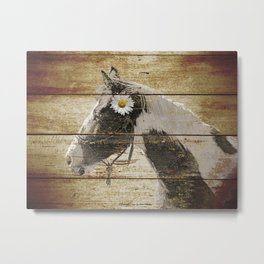 Daisy Flower on Rustic Brown Cream Horse Country Barn Art A166 Metal Print