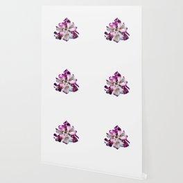Alstroemeria-Angle Wallpaper