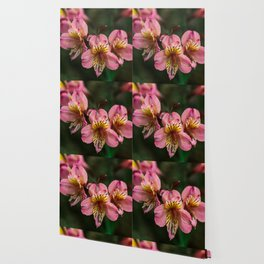 Peruvian Lily Flower Printable Wall Art | Floral Plant Botanical Nature Outdoors Macro Photography Print Wallpaper