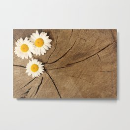 Daisies on wooden background Metal Print