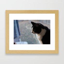 Soft Portrait of Cat Framed Art Print