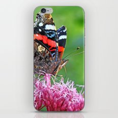 Red Admiral on a flower iPhone & iPod Skin