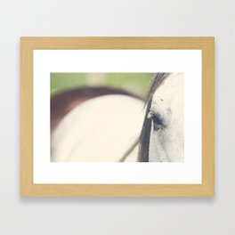 Grey Horse Framed Art Print