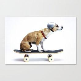 Skate Punk - Skateboarding Chihuahua Dog inTiny Helmet Canvas Print