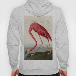 American Flamingo by John James Audubon, Vintage Illustration Hoody