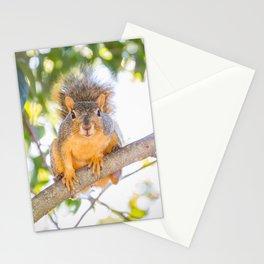 Hey Squirrel Stationery Cards