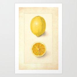 Vintage Botanical Lemon Art Print
