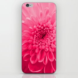 Chrysanthemum pink iPhone Skin