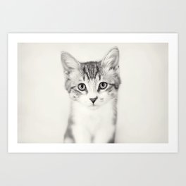 Portrait of a Kitten in Black and White Art Print