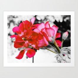 Flowers : Pop of Color Art Print
