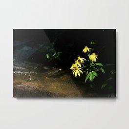 Eager Flower, Sunshine-Lover Metal Print
