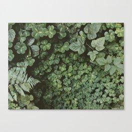 Wood Sorrel Canvas Print