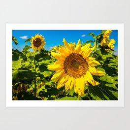 Here Comes the Sun - Giant Sunflower on Sunny Day in Kansas Art Print