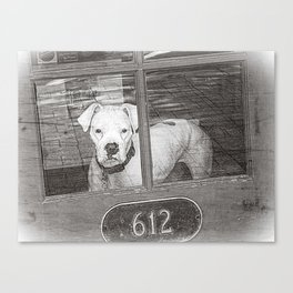 White Boxer Behind Red Door, Black and White Canvas Print