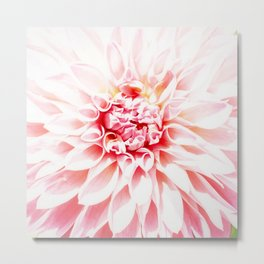 Pale Pink Dahlia Metal Print