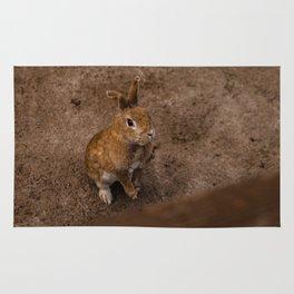 Adorable Bunny Portrait Rug