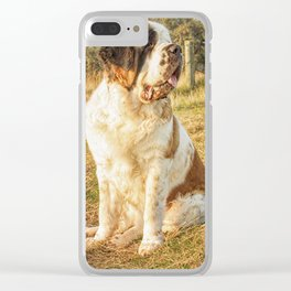 St Bernard dog in the sunset Clear iPhone Case