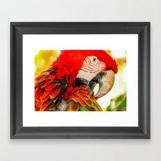 Scarlet Macaw Parrot Framed Art Print