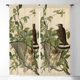 91 Broad winged Hawk Blackout Curtain