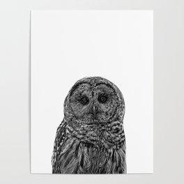 owl b&w III Poster