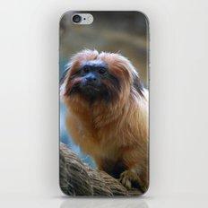 Monkey on Rope iPhone & iPod Skin