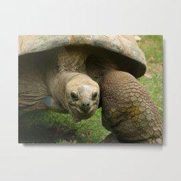 Aldabra tortoise: This IS my happy face Metal Print