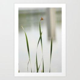 dragonfly3 Art Print