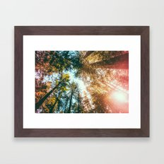 California Redwoods Sun-rays and Sky Framed Art Print