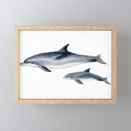 Atlantic spotted dolphin Framed Mini Art Print